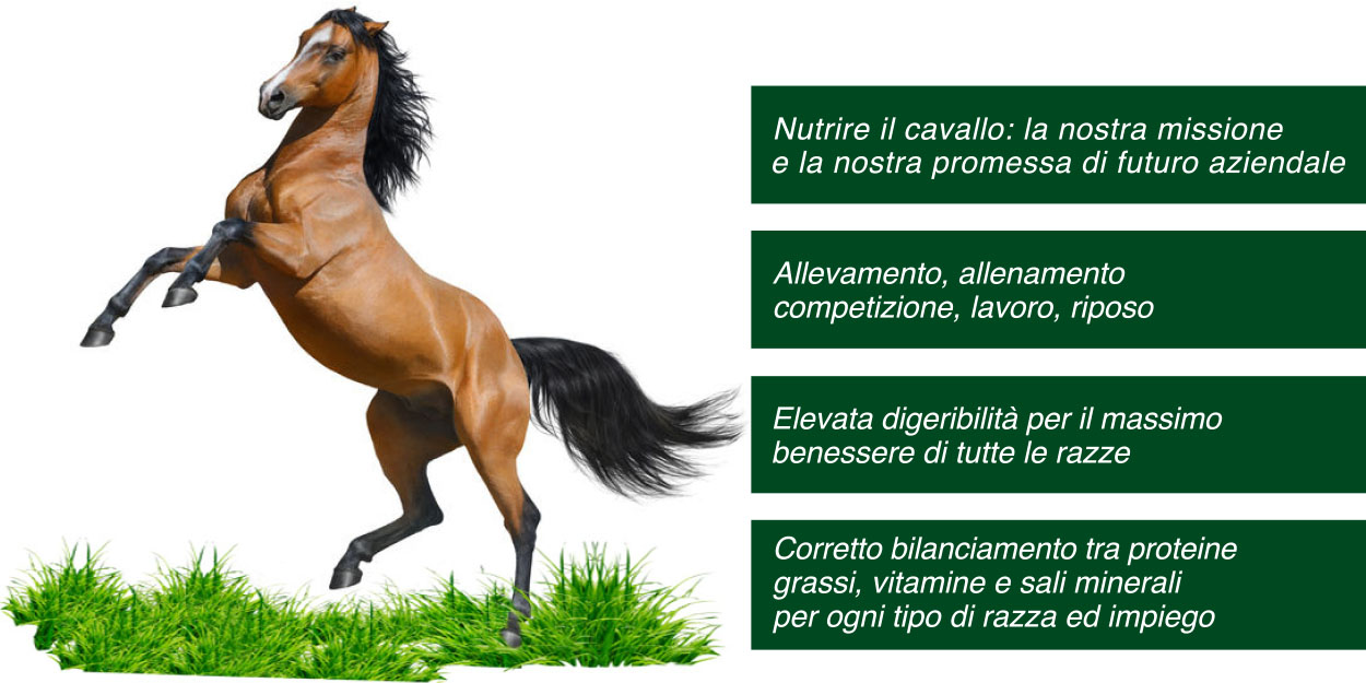 foto dx cavallo+plus