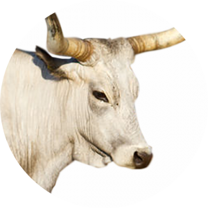 icona Bovini da carne